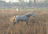 Horse - Aiguamolls de L'emporda, Catalonia