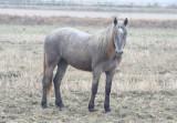 Horse - Delta de l'Ebre - Catalunya