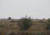Pseudosteppe - Los Monegros - Aragon - Ideal Lark habitat