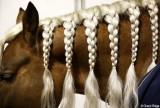 HORSES - EQUINES - CABALLO