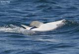 0359-dolphin.jpg