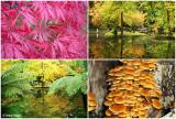 dandenongs-in-autumn1.jpg