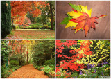 dandenongs-in-autumn2.jpg
