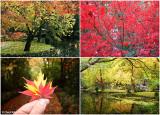 dandenongs-in-autumn3.jpg
