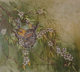 Silvereye on nest - painting by Louise Saunders