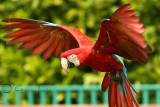 Paradise wildlife park, Broxbourne