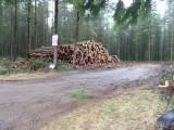 Burnt Ridge Trail Dec. 2013