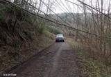FS 2750 Road and Goat Greek Trail 2016