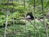 Spring Creek Arch