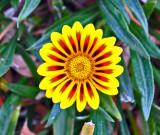 flower_071114.jpg