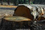 cut_tree1.jpg