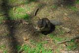 Squirrel Eating Bread