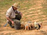 P3280852a-Feeding-the-pigs.jpg