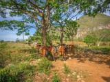 P3291432a-Horse-riding.jpg