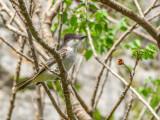 P3291532a-Bird.jpg