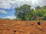 P3291735a-farmer.jpg