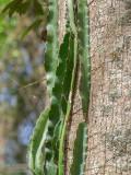 P3292084a-snake-cactus.jpg
