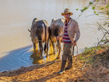 P3292424a-watering-the-ox.jpg