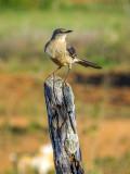 P3292504a-Bird.jpg