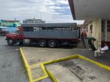 P3300968a-Buses.jpg
