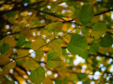 PA230567-Lush-Lime.jpg