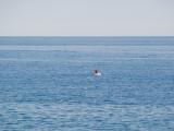 P3202141-All-at-sea.jpg