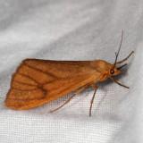 Hodges#8118 * Virbia opella