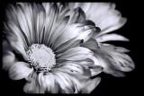 Leap Flower