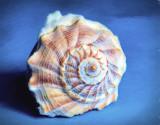 Shell insurance