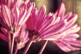 Pink February 17