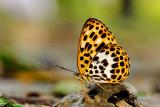 Butterflies of Taiwan