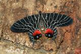Butterflies of China