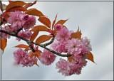 Spring in Ladysmith