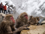 Japan 2014 Snow Monkeys