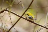 Friday birds