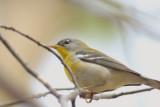 May 10-11-14 Weekend Birds