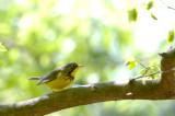 May 17th birds