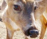 Some Deer