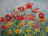 Poppies £300