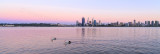 Pelicans on the Swan River at Sunrise, 28th October 2013