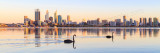 Black Swans on the Swan River at Sunrise, 4th December 2013