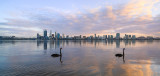 Black Swans on the Swan River at Sunrise, 16th July 2014