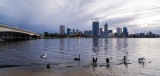 Pelicans on the Swan River at Sunrise, 22nd July 2014
