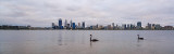 Black Swans on the Swan River at Sunrise, 29th November 2014