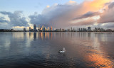 Pelican on tthe Swan River at Sunrise, 29th June 2016