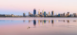 Pelican on the Swan River at Sunrise, 2nd November 2016