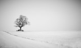 Winter. Lonely.