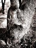 Portrait  of Gaint