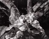 Tropical leaves.jpg
