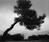 Tree, Venice.jpg